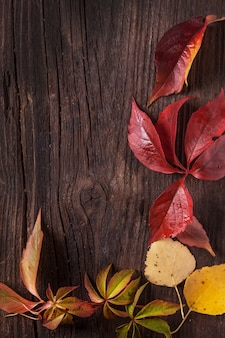 Ornament boarder from autumn leaves