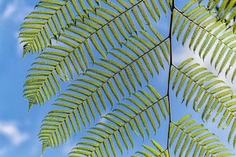 Ornamental bright green  fern leaves with sky background