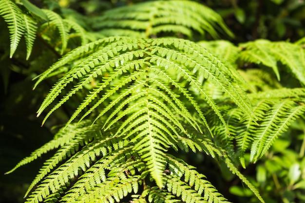 Ornamental fern leaves
