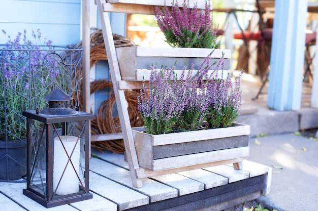 Ornamental garden plant blooming heather calluna vulgaris  in a pot in terrace of house decorating summer garden