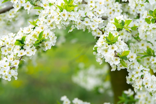 新緑の芝生の上に堂々と咲く大きな木がある観賞用庭園。