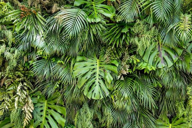 観賞用の緑の葉の背景。