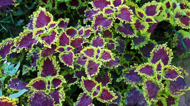 Ornamental plant in the early morning