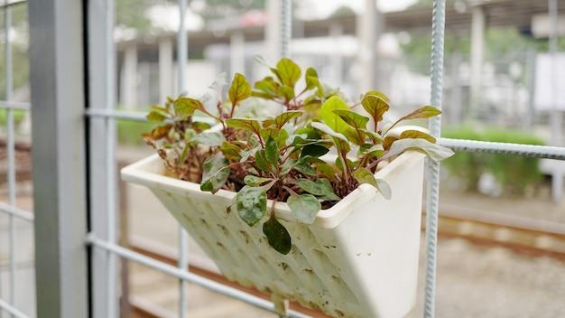 鉄の網にぶら下がっている観賞植物