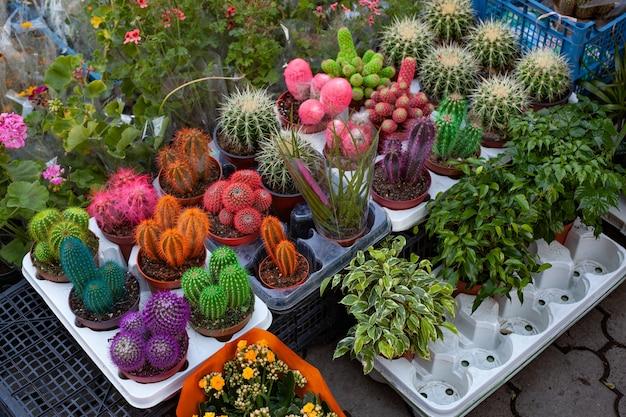 Продажа декоративных растений в горшках и целлофане.