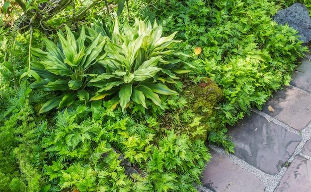 Декоративные растения с камнем