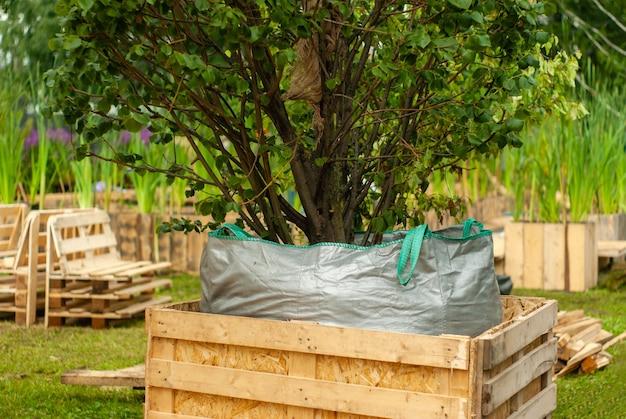 Декоративное дерево с корнями и почвой упаковано в мешок и ящик для транспортировки.