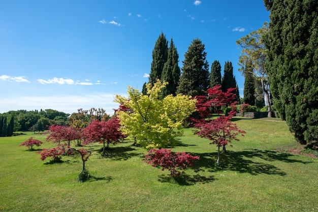 遠くに広大なきれいな緑の芝生とヒノキの木がある公園や植物園の色とりどりの葉を持つ装飾用の木や低木