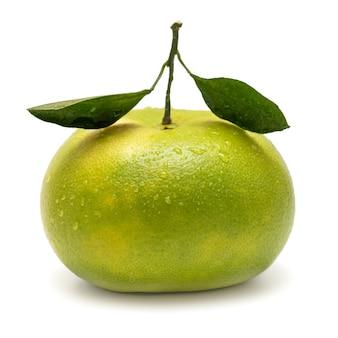 Oroblanco sweetie citrus grandis seedless hybrid fruit