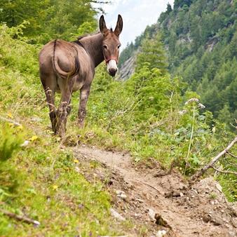 Парк орсьера, регион пьемонт, италия: бесплатный осел в парке