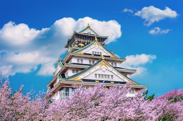 Замок осаки и цветение сакуры весной. сезоны сакуры в осаке, япония.