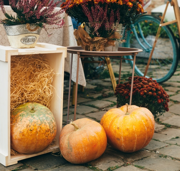 Outdoor autumn or fall decorations with big pumpkins and different flowers.