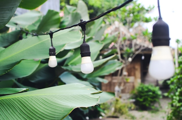 Outdoor coffee shop with decorative lights and plants