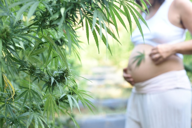 焦点の合っていない背景を持つ妊婦とのcbdの屋外栽培。