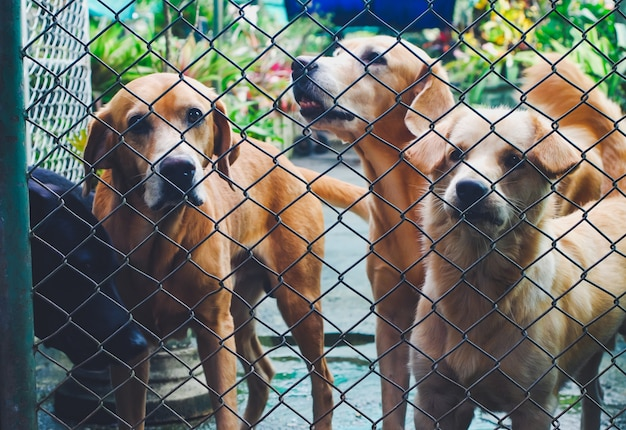 Outdoor dogs in shelter mesh.