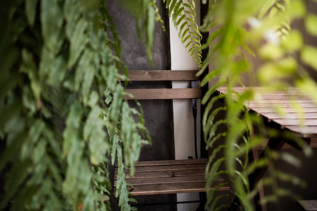 Outdoor empty chair surrounded by green fern leaves in the garden or backyard.