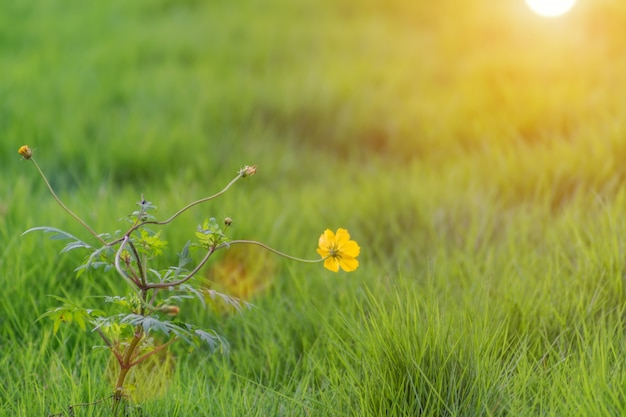 Открытый цветы лагерь красивый