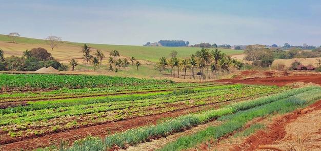 Открытый кадры сельского пейзажа. ферма на солнце с плантациями альфы, петрушки, чеснока и базилика.