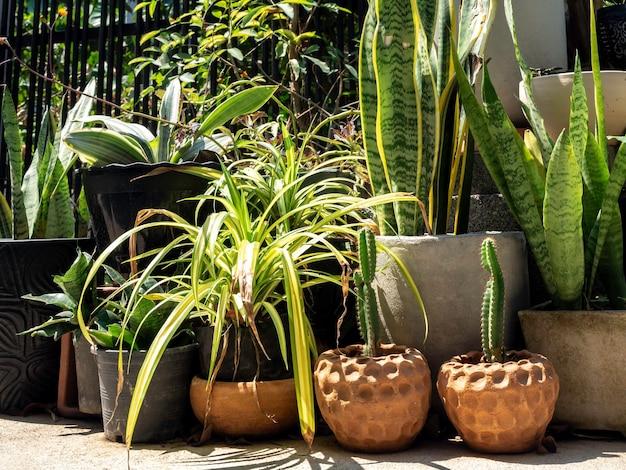 건물 근처 땅에 많은 화분에 선인장과 다양한 녹색 식물이있는 야외 정원.