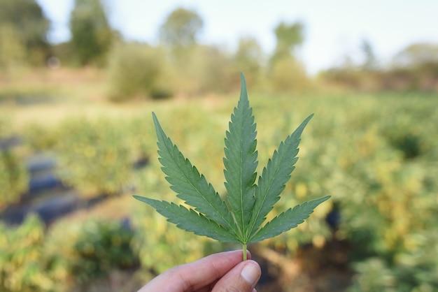 背景cbd植栽と屋外麻の葉