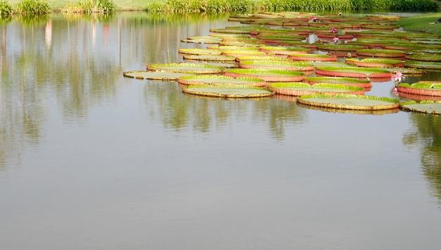 池のある屋外風景庭園