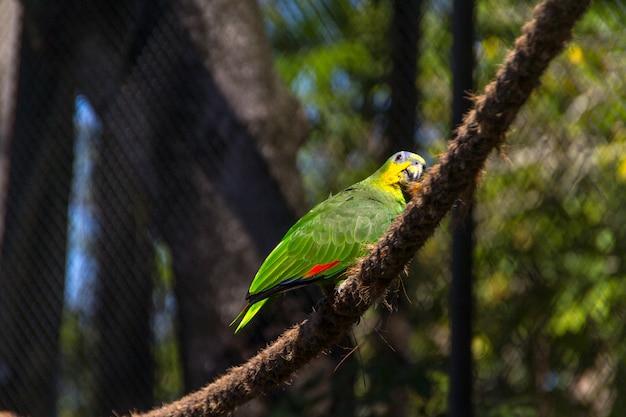 브라질 리우데자네이루의 공원에 있는 야외 앵무새.