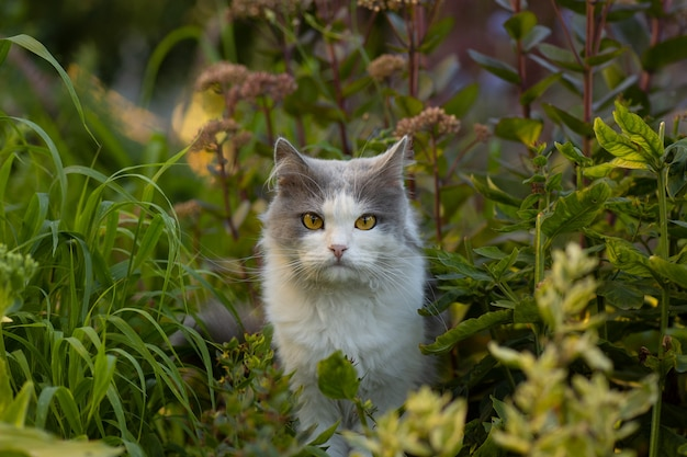 Outdoor portrait of cat playing with flowers in a garden