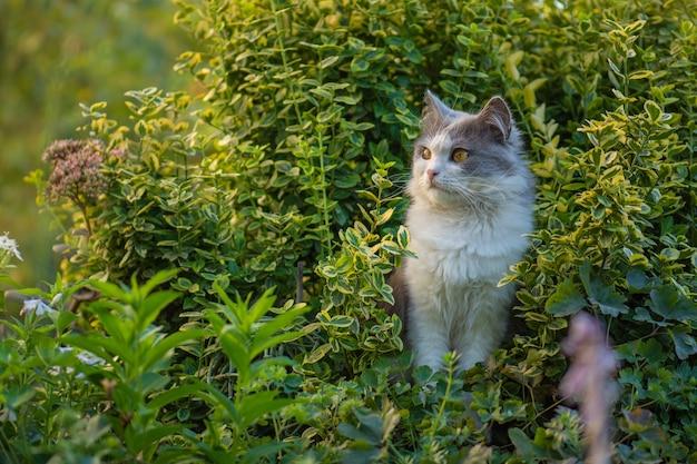 庭で花と遊ぶ猫の屋外の肖像画。若い猫が歩き、美しい庭を楽しんでいます。屋外の自然の雰囲気の瞬間。