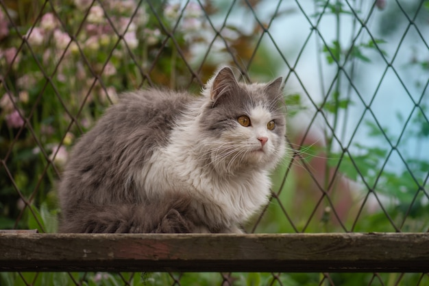 정원에서 꽃을 가지고 노는 고양이의 야외 초상화