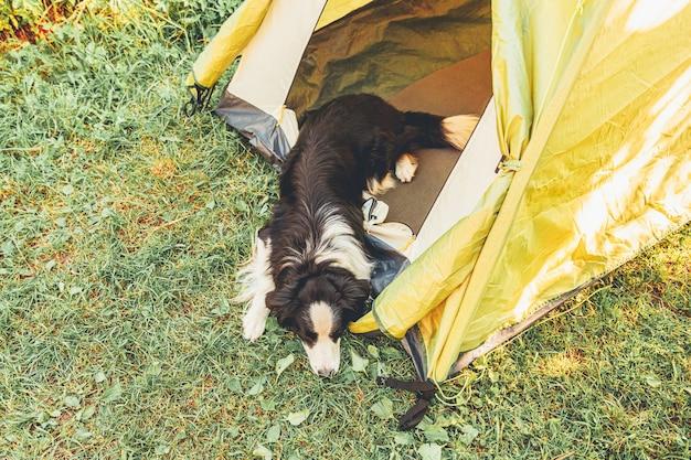 キャンプテントの中に横たわっているかわいい面白い子犬の犬のボーダーコリーの屋外の肖像画。ペットの旅行、犬の仲間との冒険。保護者とキャンプの保護。旅行観光のコンセプト