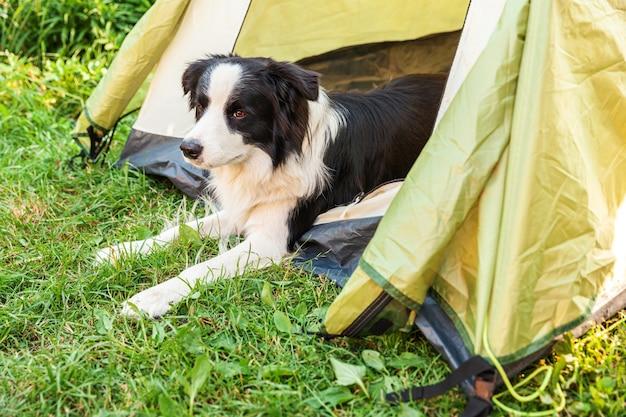 キャンプテントの中に横たわっているかわいい面白い子犬の犬のボーダーコリーの屋外の肖像画。ペットの旅行、犬との冒険