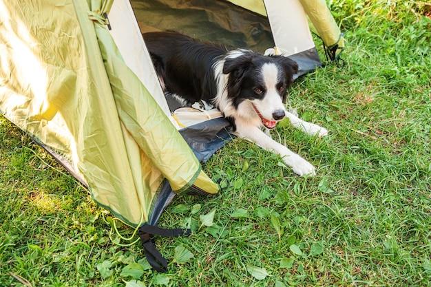 Открытый портрет милый забавный щенок бордер-колли, лежа внутри в палатке для кемпинга.