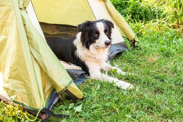 캠핑 텐트 안에 누워 귀여운 재미있는 강아지 보더 콜리의 야외 초상화.