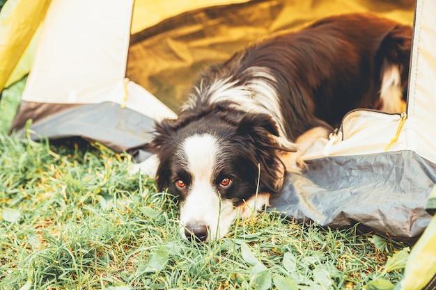 キャンプテントの中に横たわっているかわいい面白い子犬の犬のボーダーコリーの屋外の肖像画