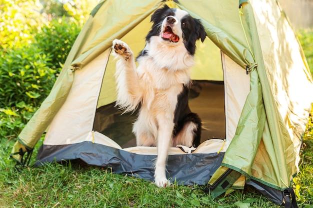 캠핑 텐트 안에 앉아 귀여운 재미 강아지 보더 콜리의 야외 초상화
