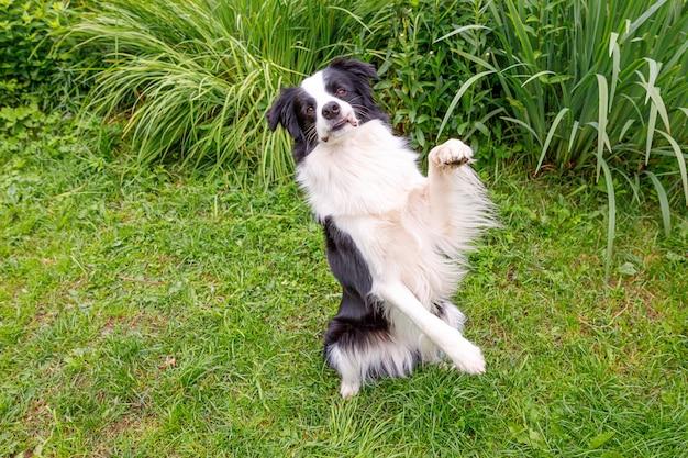 草の上に座っているかわいい笑顔の子犬ボーダーコリーの屋外の肖像画