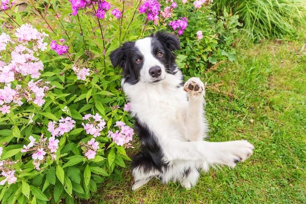 Открытый портрет милого улыбающегося щенка бордер-колли, сидящего на траве