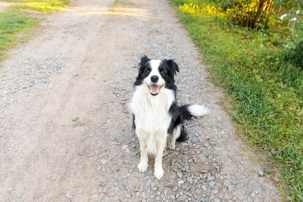 공원 배경에 앉아 웃고 있는 귀여운 강아지 보더 콜리의 야외 초상화. 화창한 여름날 야외에서 재미있는 얼굴을 한 작은 개. 애완 동물 관리와 재미있는 동물 생활 개념.