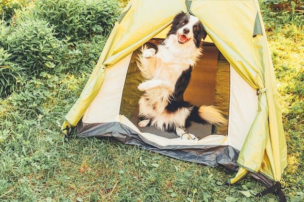 キャンプテントの中に座っている屋外の子犬の犬のボーダーコリー。ペットの旅行、犬との冒険