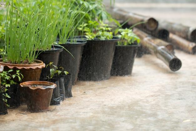 야채 냄비와 함께 야외 비가