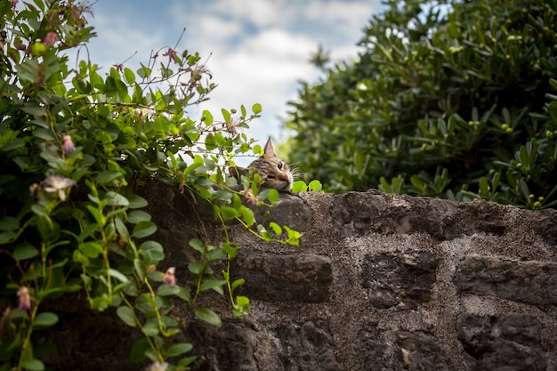 큰 돌 벽에 잠자는 회색 고양이의 야외 촬영