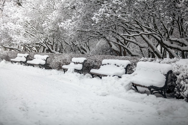 눈에 덮여 공원에서 벤치 행의 야외 촬영