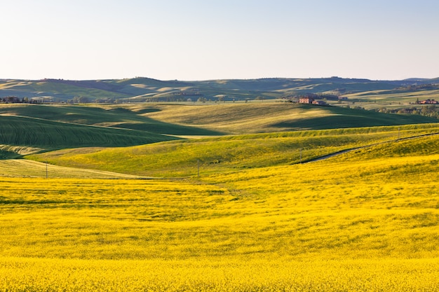 Outdoor tuscan val d orcia green and yellow fields
