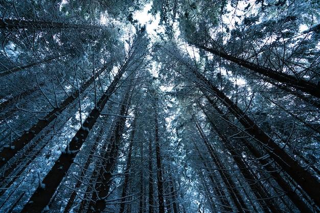 木の森の屋外ビュー