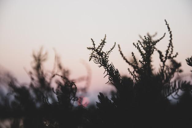 Открытый вид на фоне вечерней природы