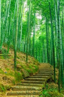 屋外の活力新鮮なジャングル日本の中国