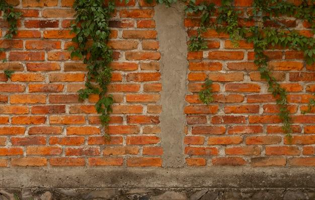 さまざまな葉のある屋外の壁
