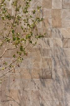 다양한 잎을 가진 야외 벽