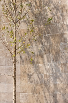 Outdoors wall with various leaves