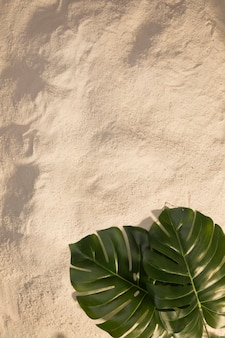 Oval monstera leaves on sandy beach